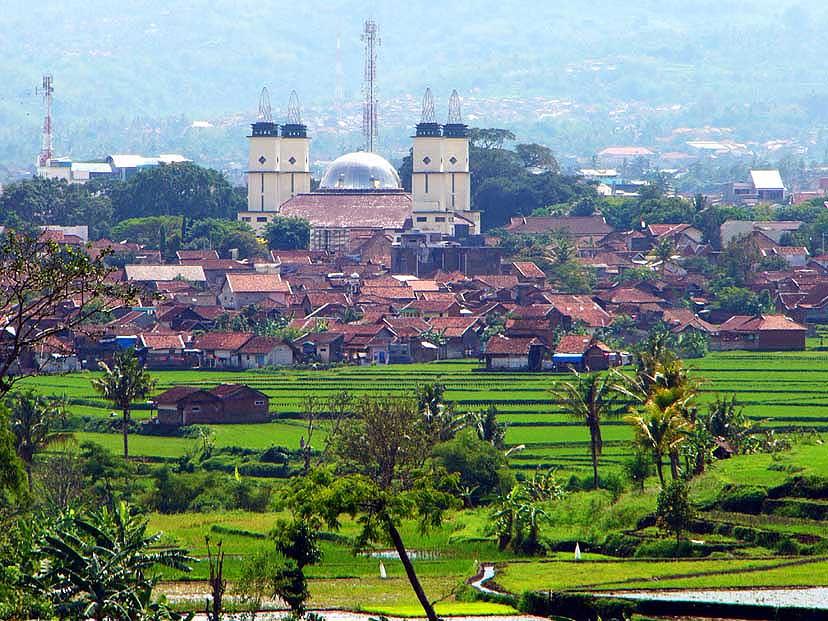 bäume indonesien rote blüten