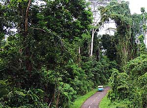 Halmahera/North Moluccas/Indonesia: Jungle road on the Trans Halmahera Highway between Tobaru and Weda